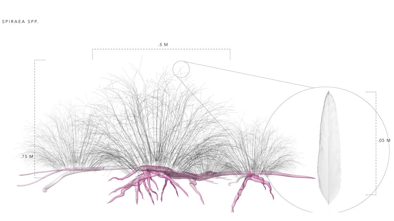 Gjesteforelesning: Rosetta Elkin - Theories of Plant Life